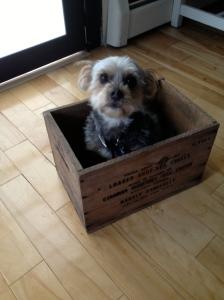 Pepsi in box